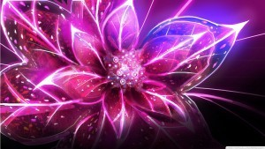 Amazing pink flower abstract HQ wallpaper