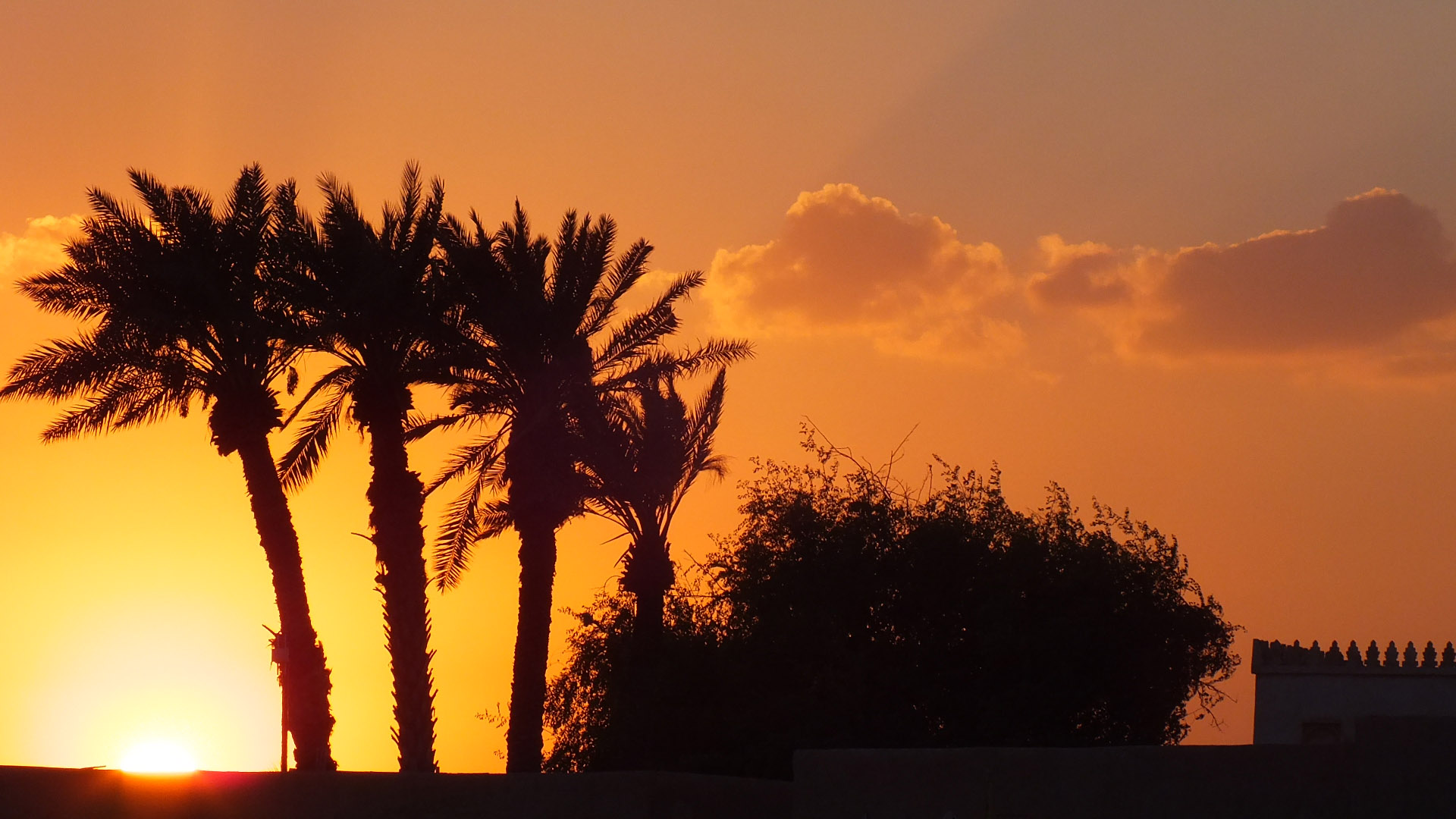 Palm trees sunset new wallpapers