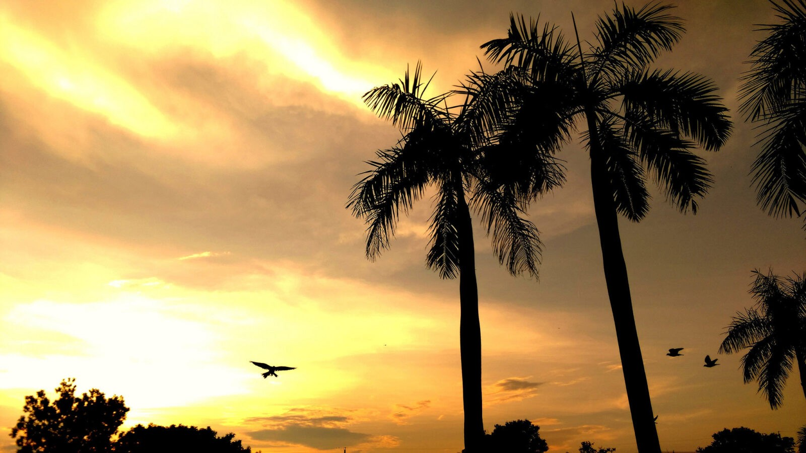Palm trees sunset high quality background