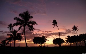 Palm trees sunset widescreen
