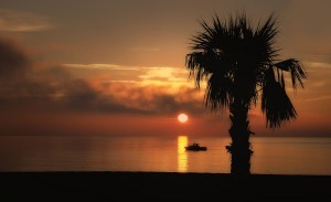 Palm trees sunset HD photos
