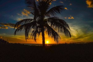 Palm trees sunset 2016 free wallpapers