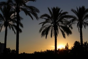 Palm trees sunset beauty nature picture