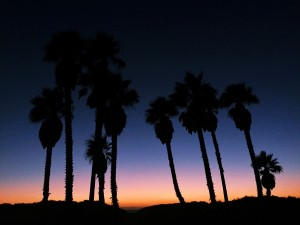 Palm trees sunset pics in HD
