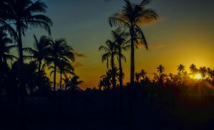 Palm trees sunset wallpaper free download
