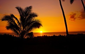 Palm trees sunset new HD picture