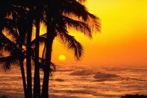 Palm trees sunset waves sea wallpaper