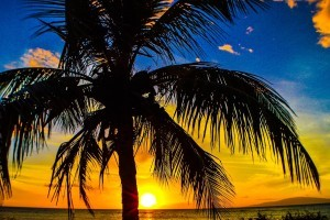 Coco nut Palm trees sunset blue sky picture