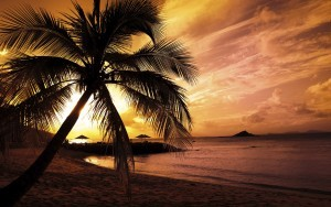 Coco nut Alone Palm trees sunset free background