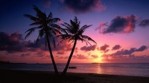 Palm trees sunset wallpapers HD free Download