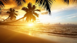 Palm trees sunset cool nature for PC