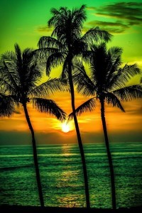 Wallpaper coco nut palm trees sunset for Android and iPhone