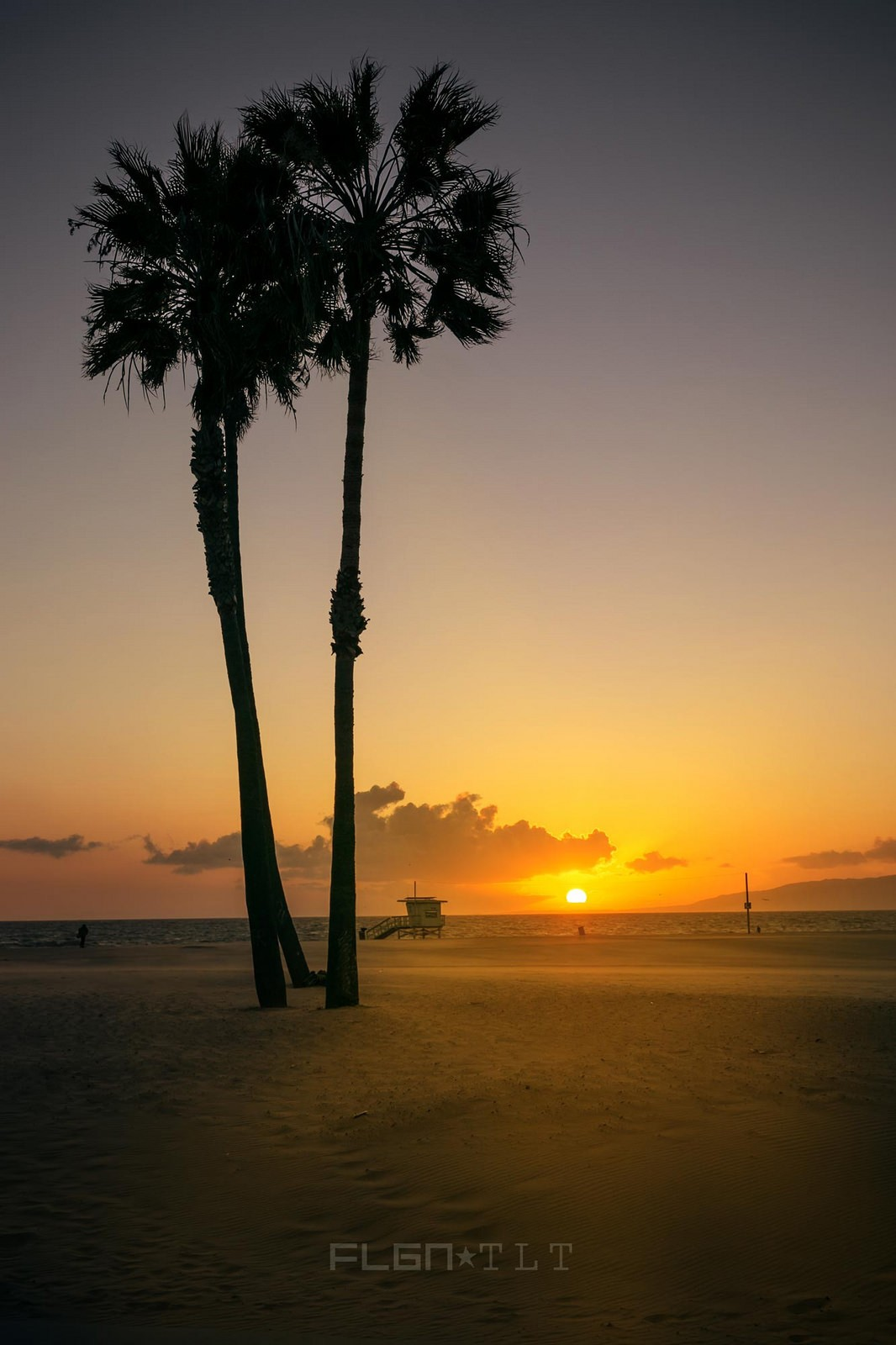 Beach palm trees sunset free for mobiles