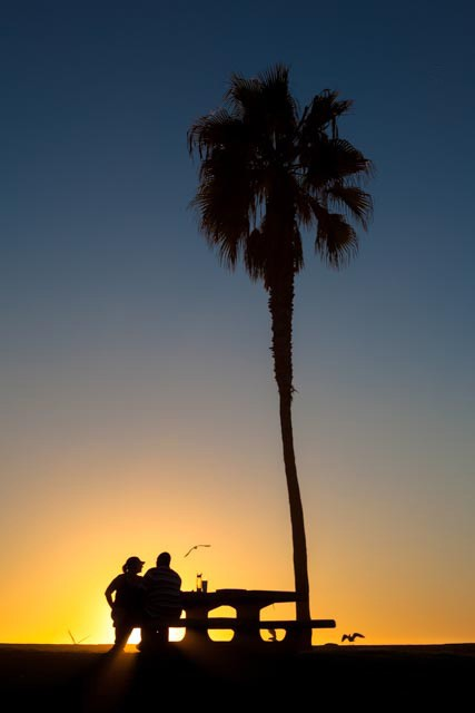 Palm trees sunset love Android download