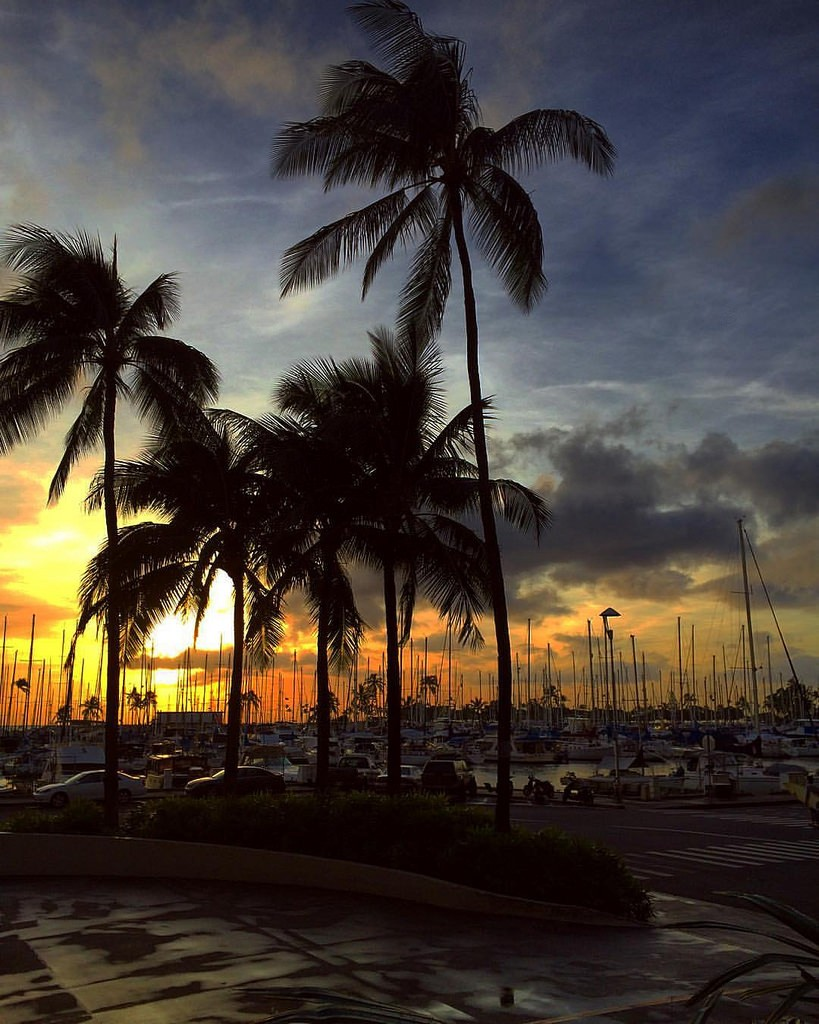 Palm trees sunset iPhone download