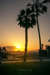 Palm trees sunset images