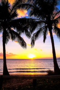Wallpapers palm trees sunset for Android