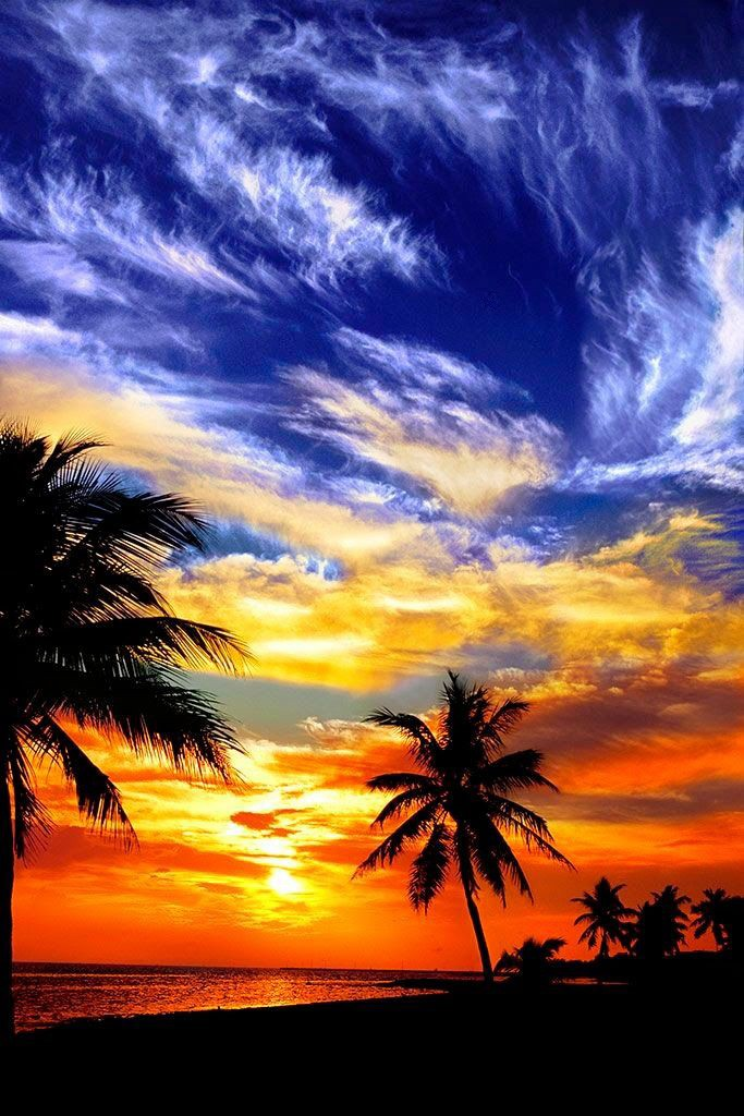 50 palm trees sunset wallpapers hd high quality download for Florida cool