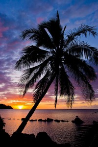 Palm trees sunset iPhone HD