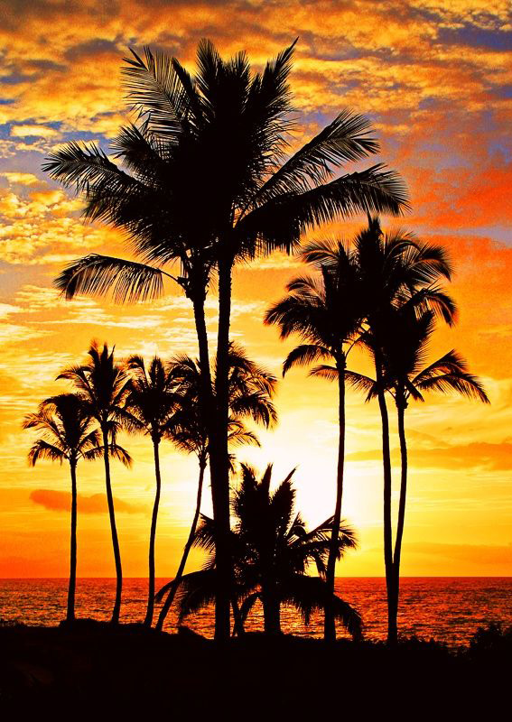 Palm trees sunset for mobile phones