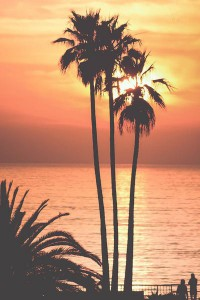 Palm trees sunset Android wallpapers