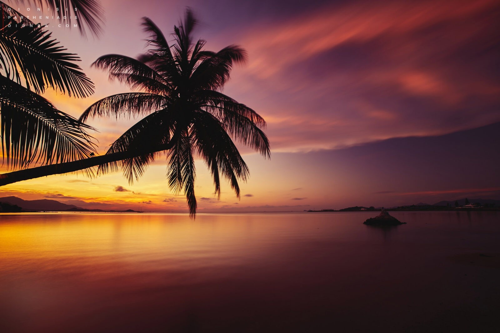 Palm trees sunset free download