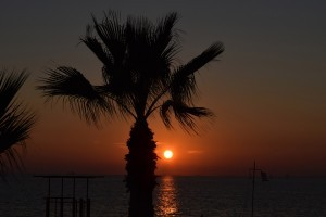 Palm trees sunset full HD