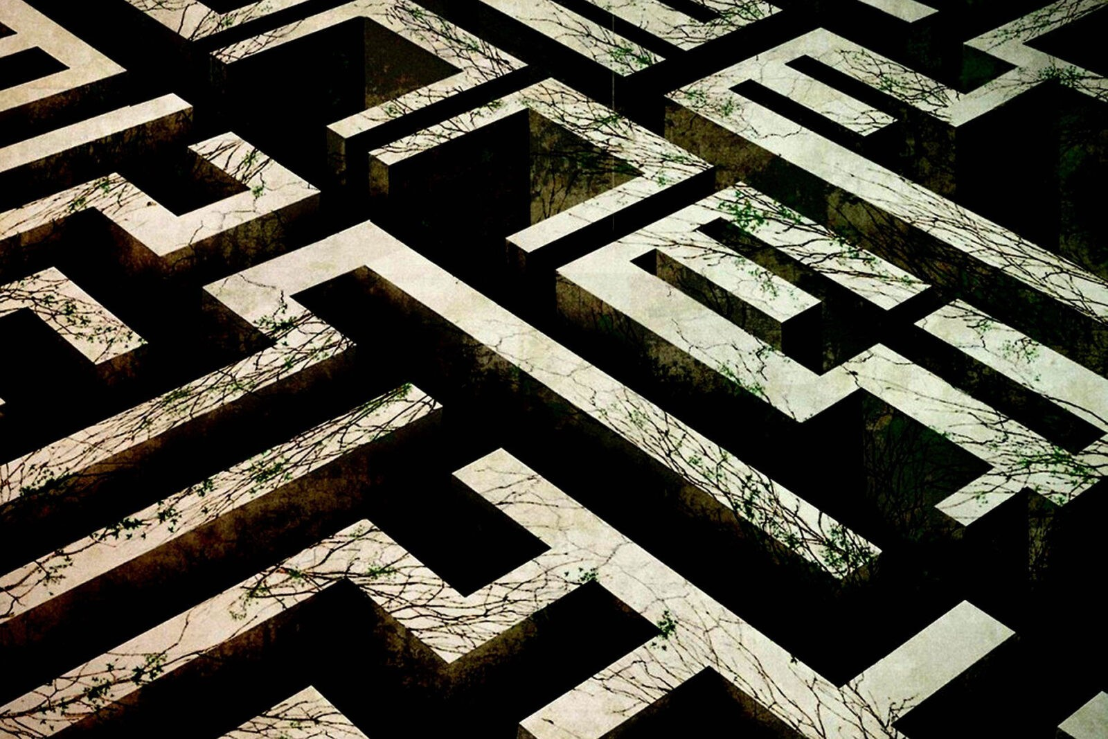 the maze runner The maze runner study guide contains a biography of james dashner, literature essays, quiz questions, major themes, characters, and a full summary and analysis.