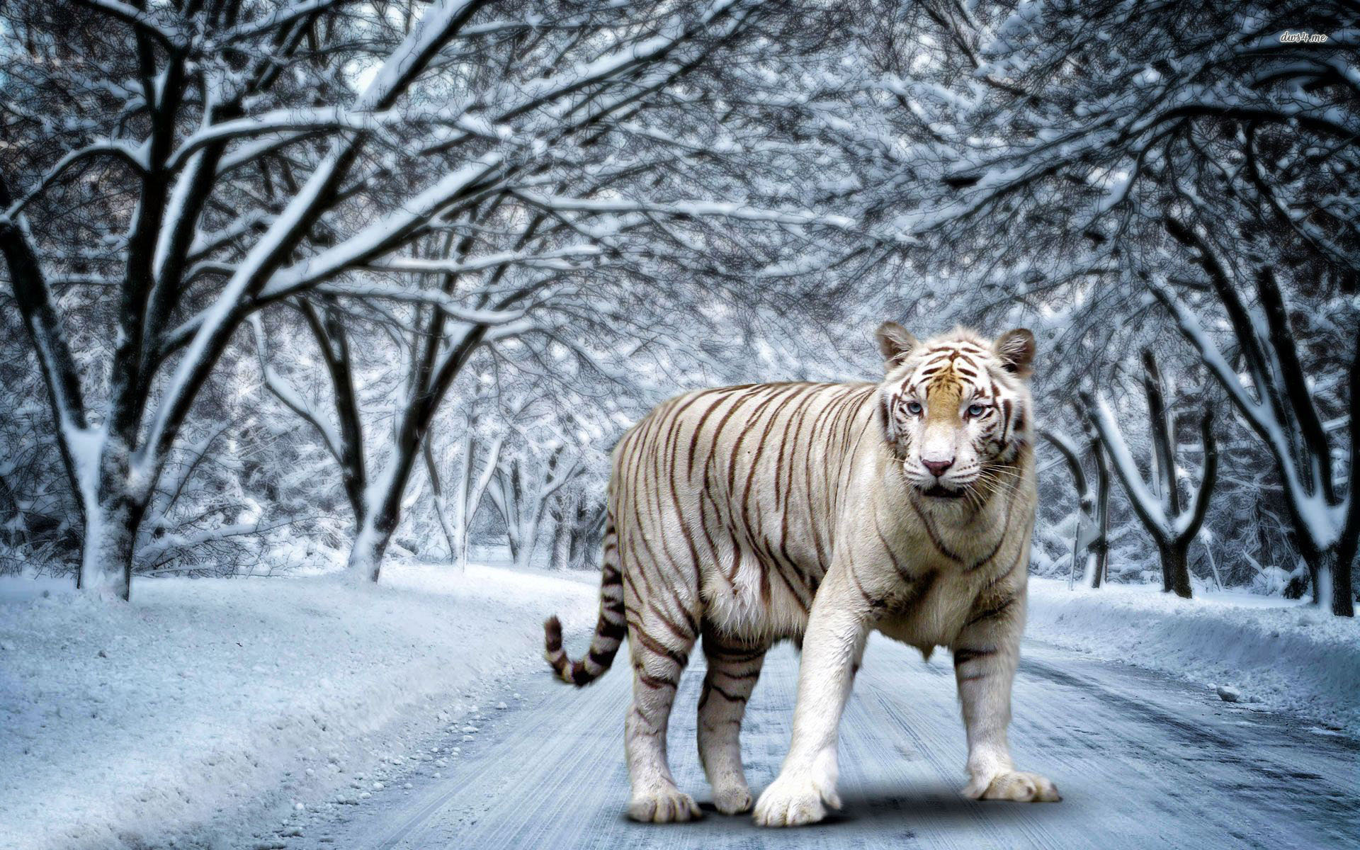Tiger hd wallpapers free download - Tiger hd wallpaper for pc ...
