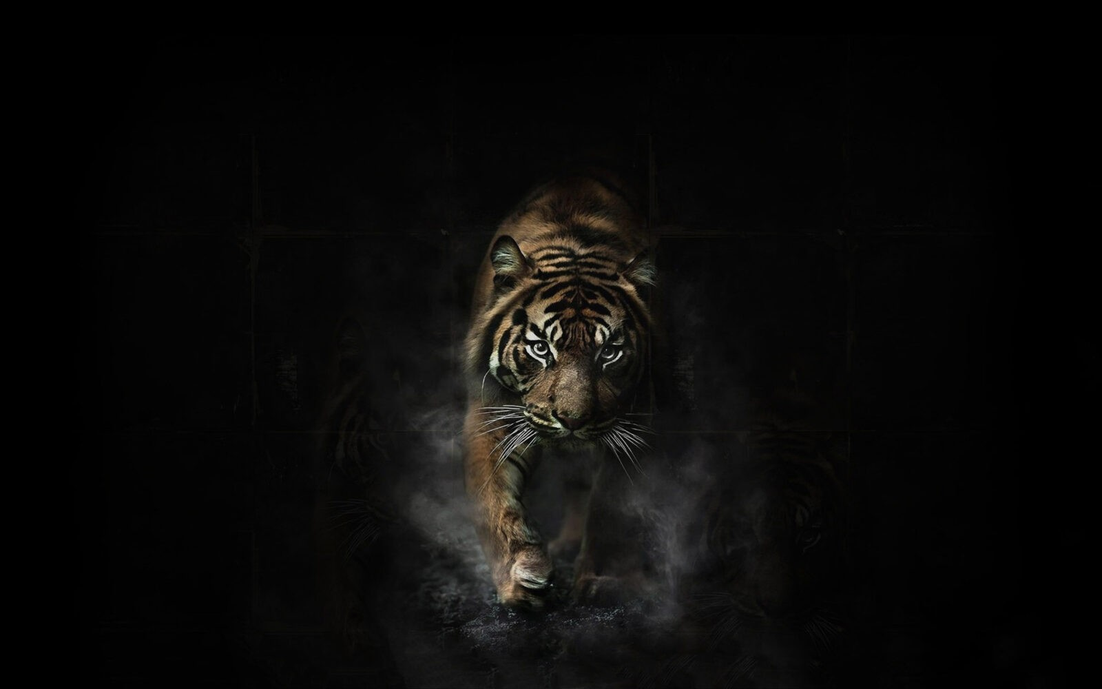tiger hd wallpapers free download