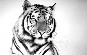 Tiger wallpaper free download
