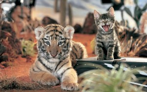 Tiger cub and kitty HD for desktop
