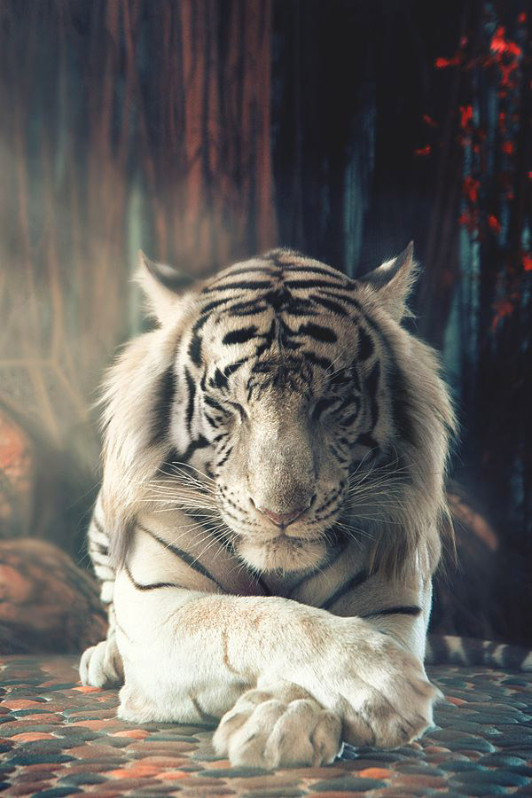 White Tiger for iOS and Android