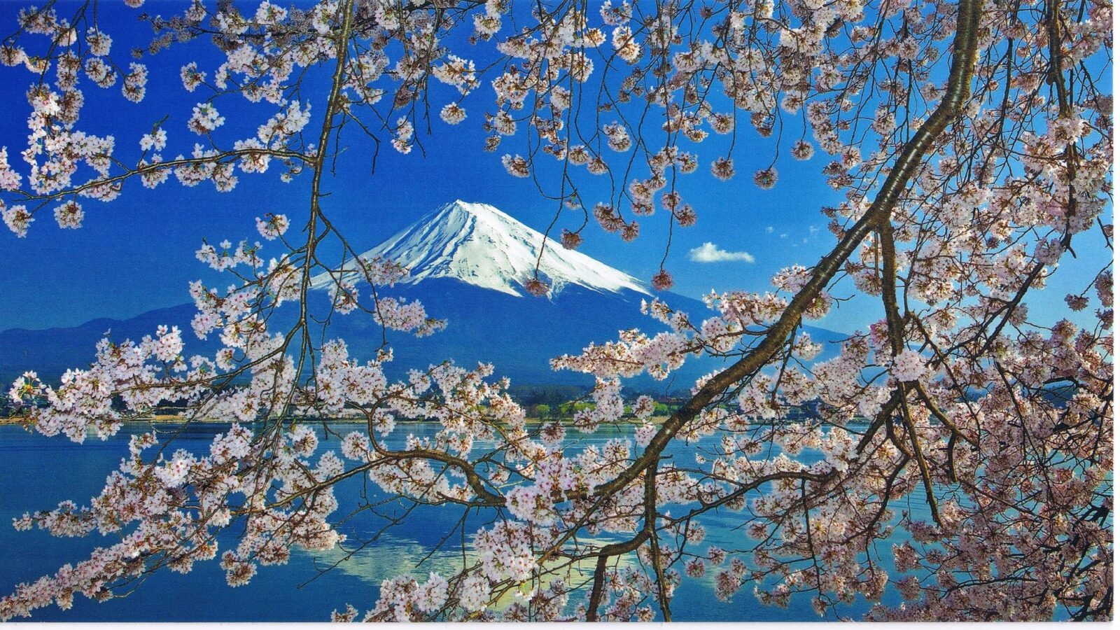 Cherry blossoms mount Fuji sacura free download