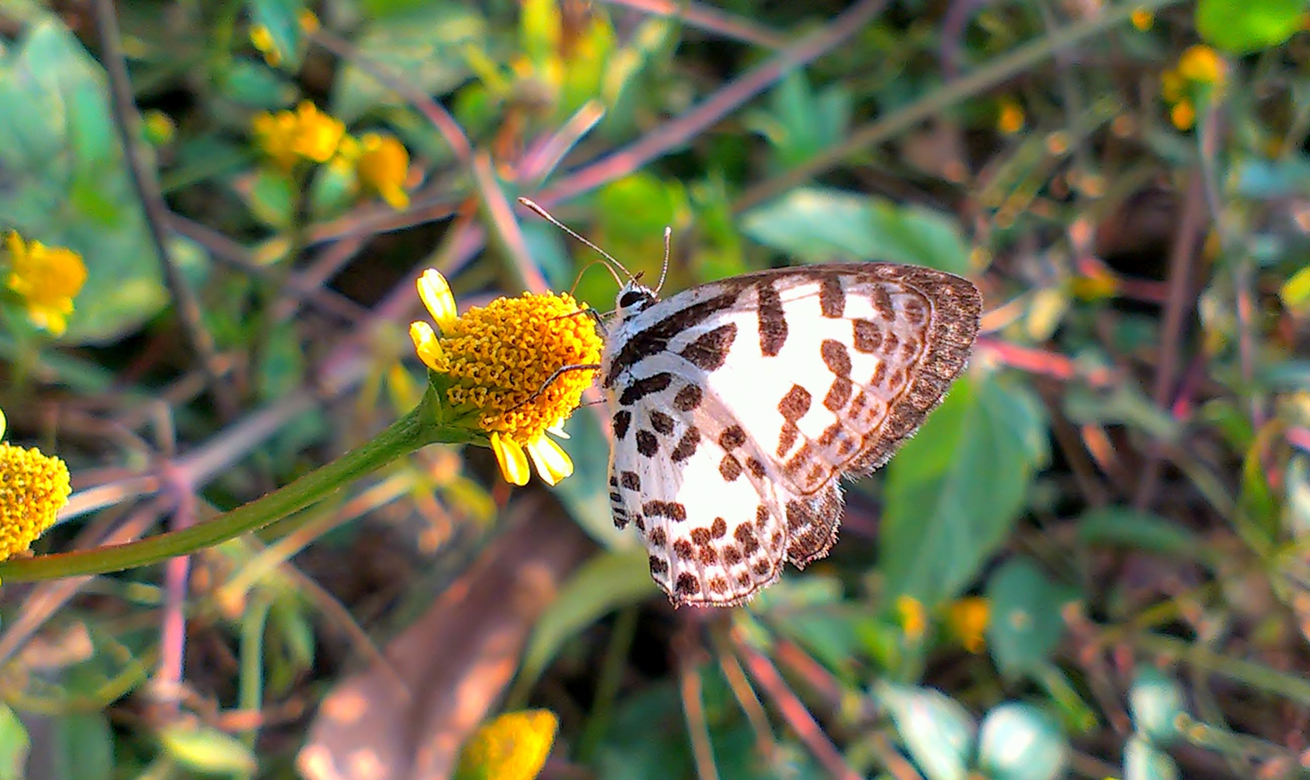 Nature butterfly free download