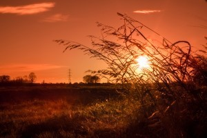 Nature field sunset full HD image