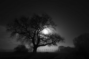 Nature tree bw HD 1080p wallpaper