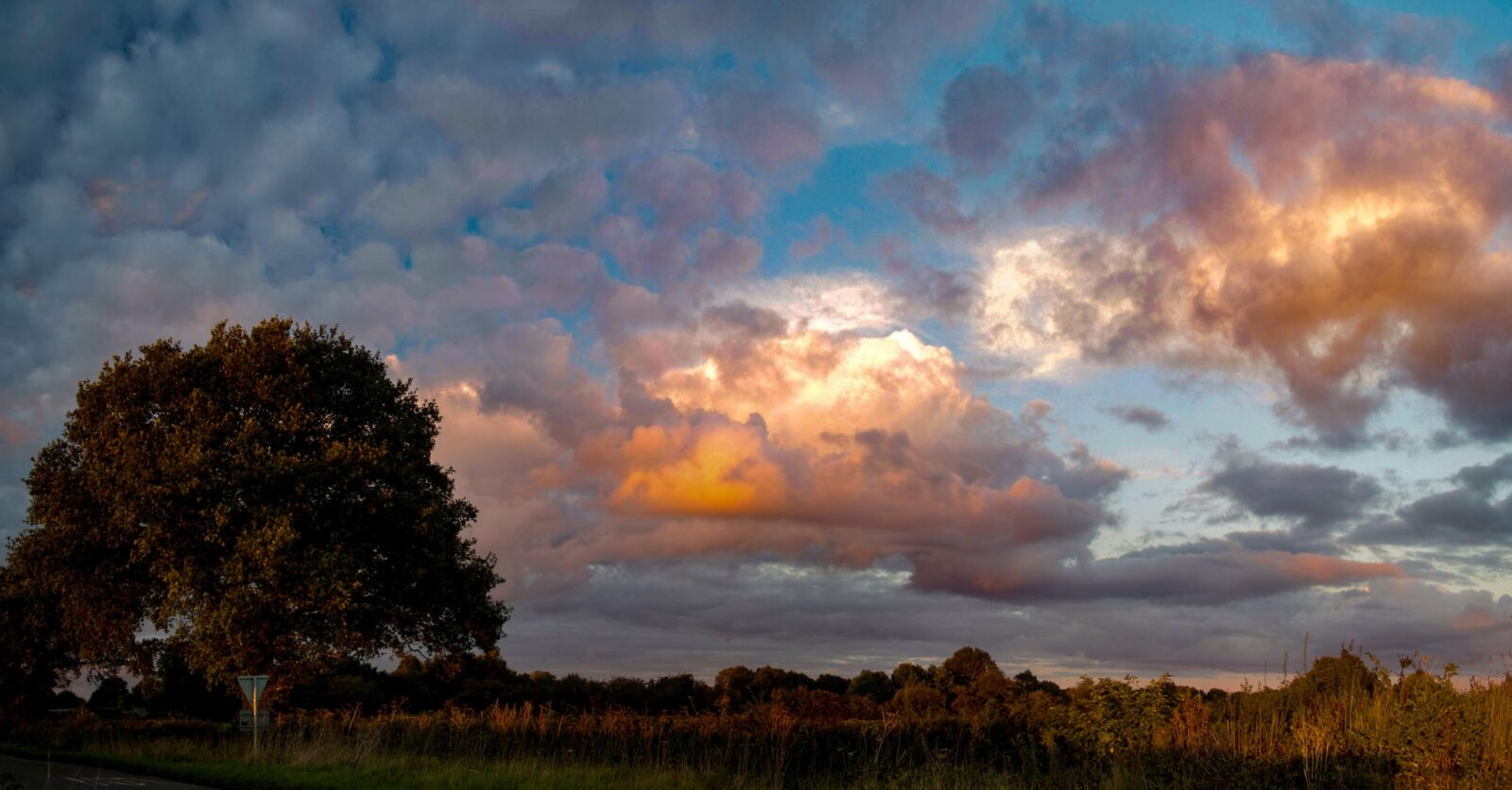 Best image of Nature tree clouds