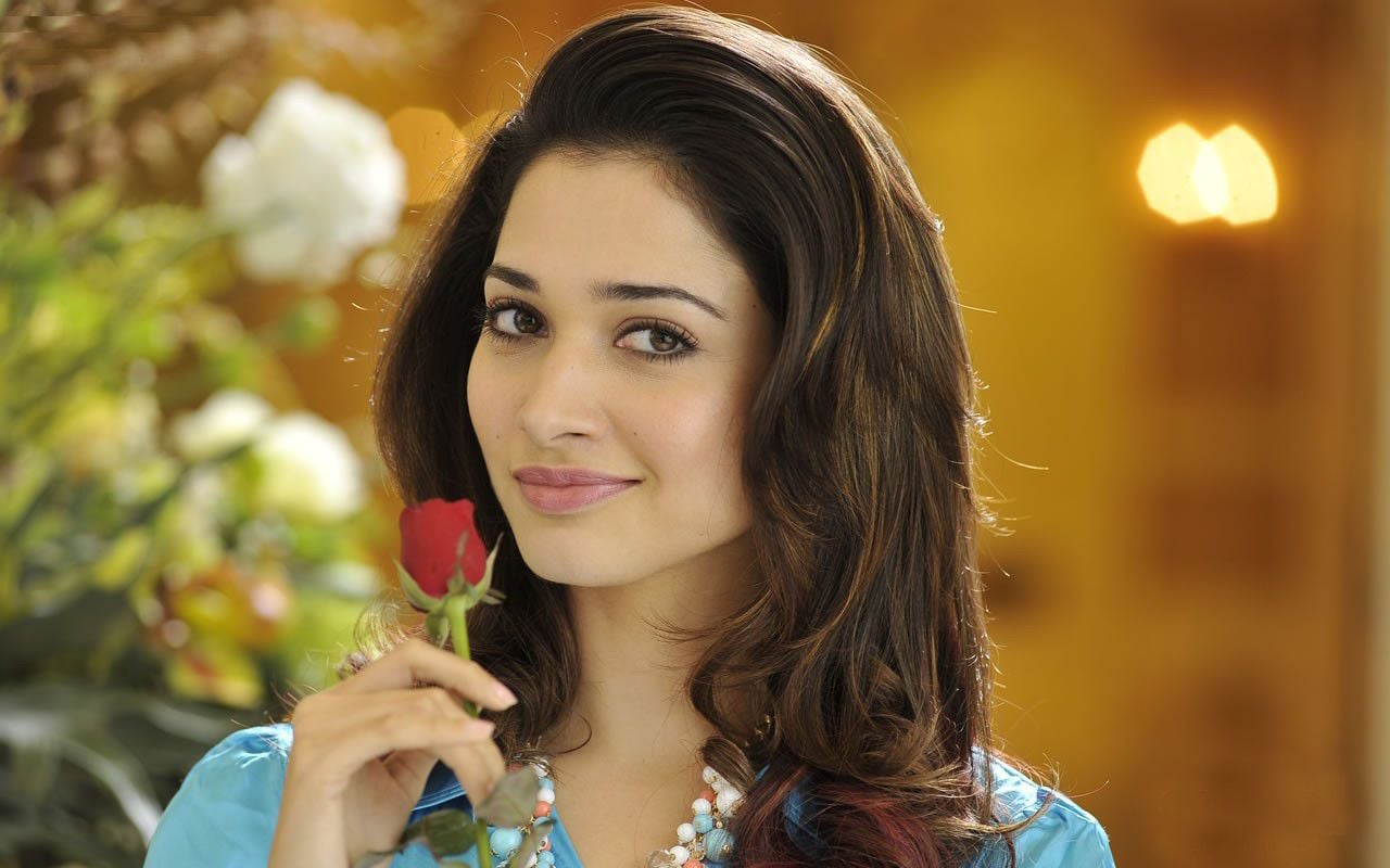 Tamannaah Bhatia red rose High Quality wallpapers