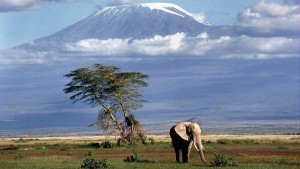 elephant mount Kilimanjaro clouds HD wallpapers