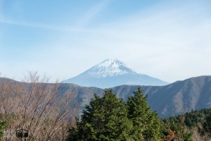 forest mount Fuji HD pic