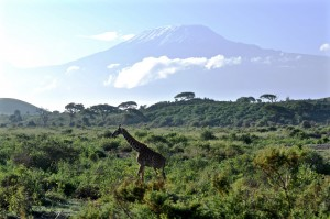 giraffe and mount Kilimanjaro travel free download