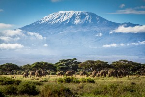 many elephants under mount Kilimanjaro HD for desktop
