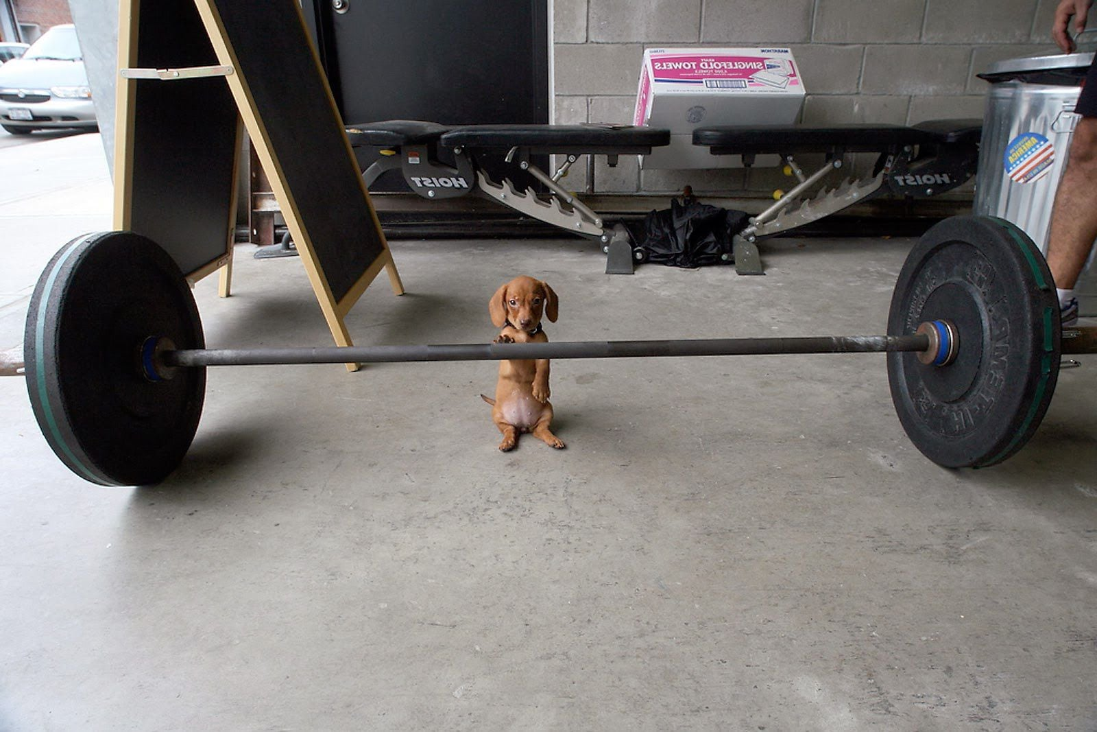 Barbell and puppy HD pic