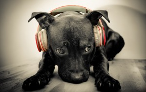 Beats By Dr Dre puppy High Definition wallpaper