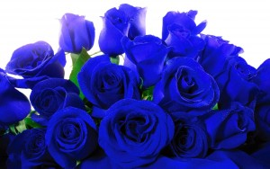 Best Blue rose wallpapers backgrounds