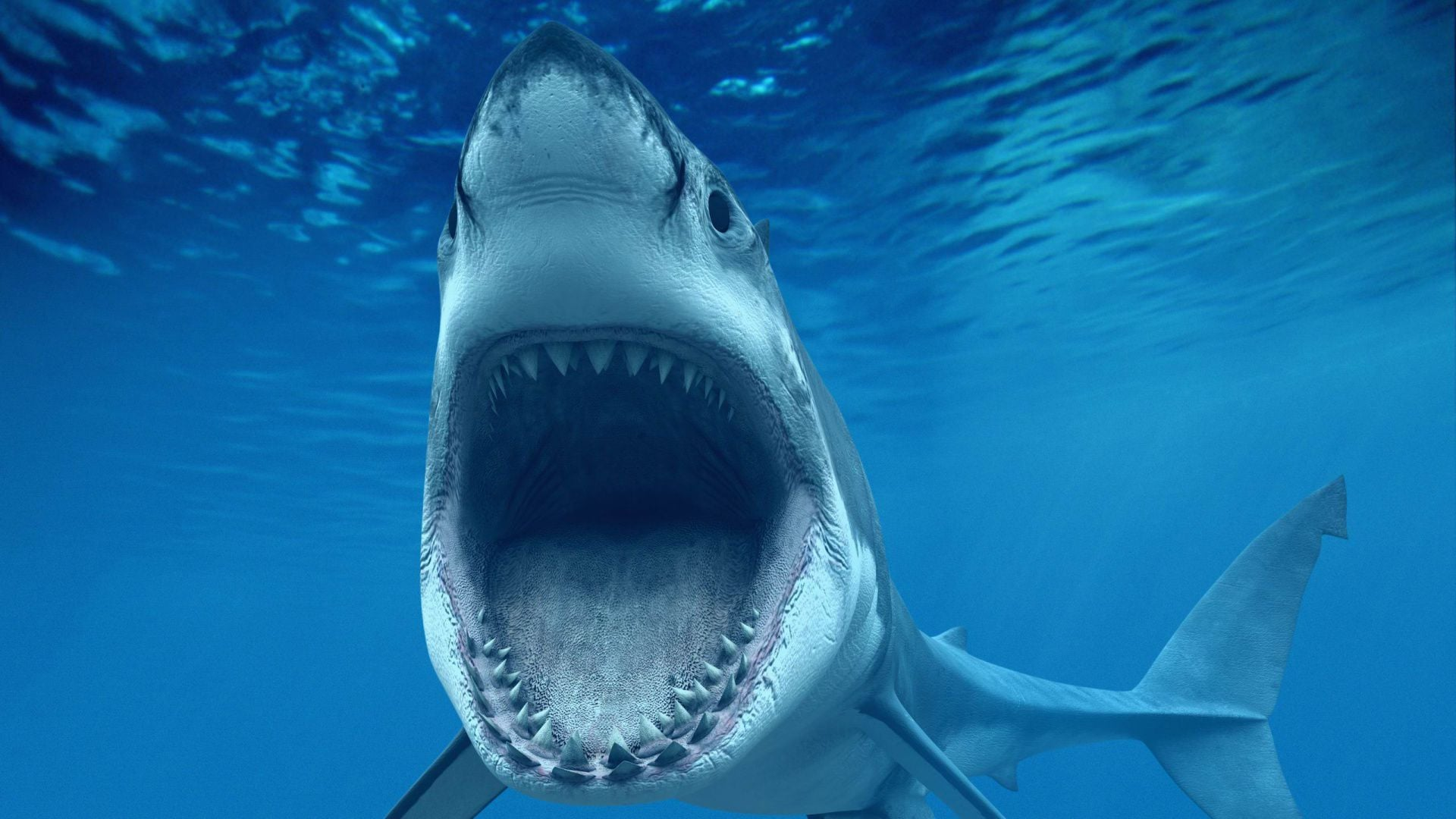 Great White Shark mouth 2016