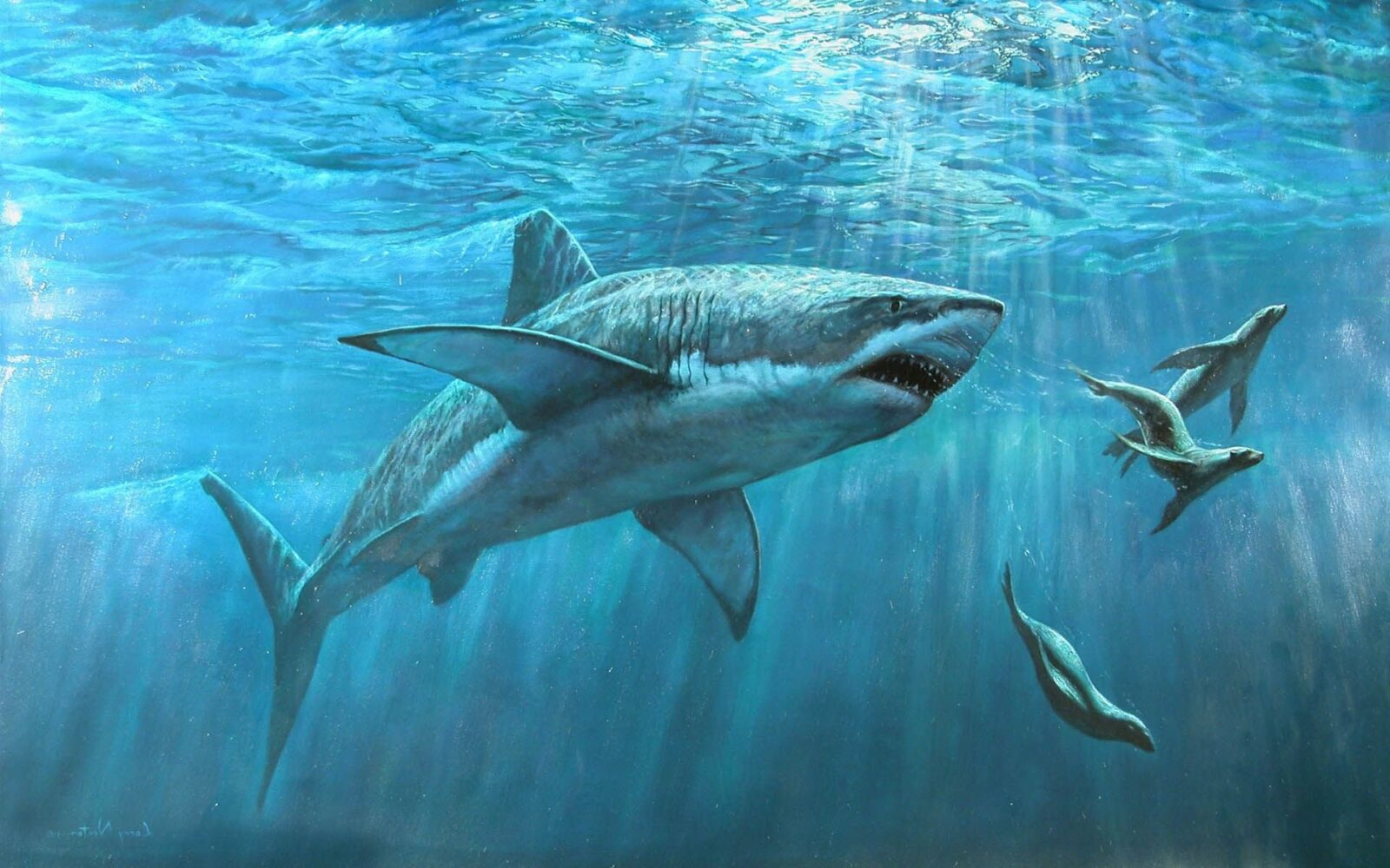 Great White Shark new wallpapers