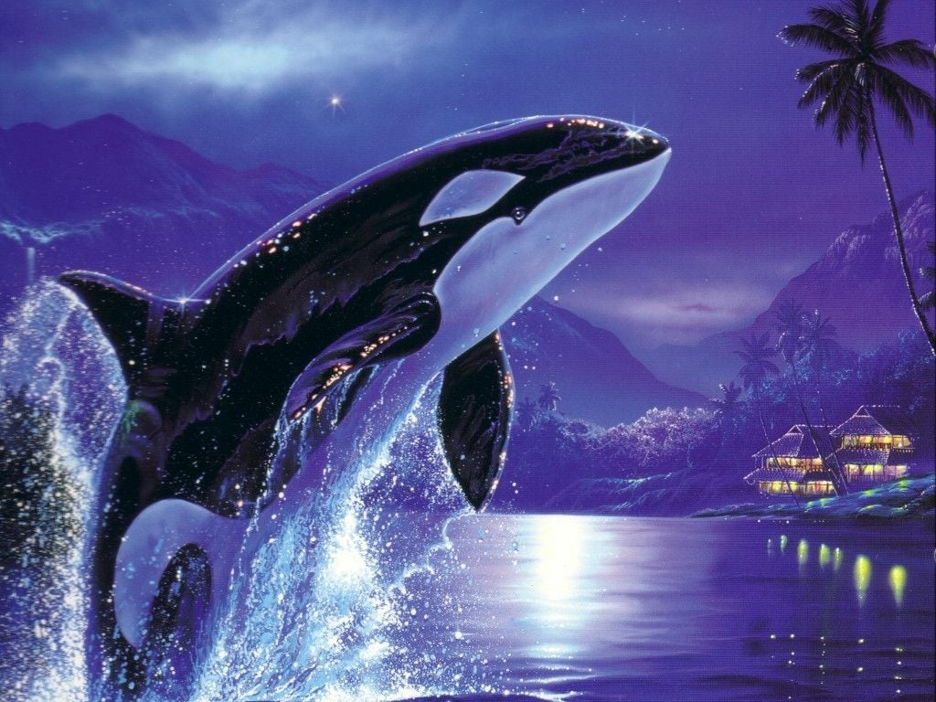 Orca Killer Whale HD wallpapers