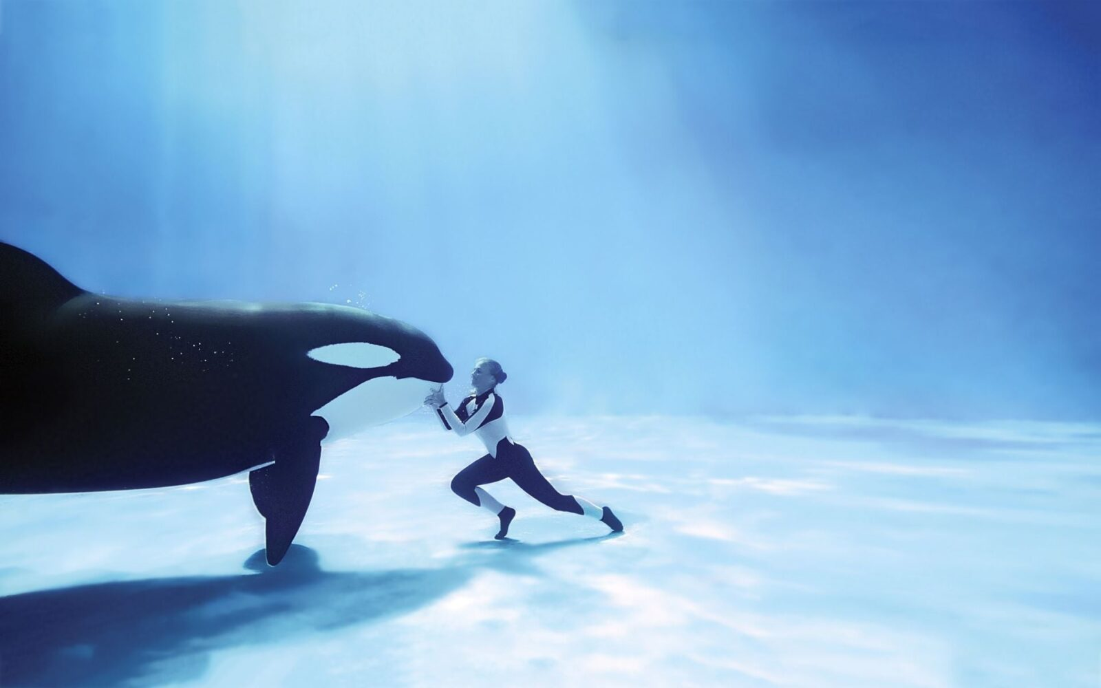 Killer whale and baby wallpaper